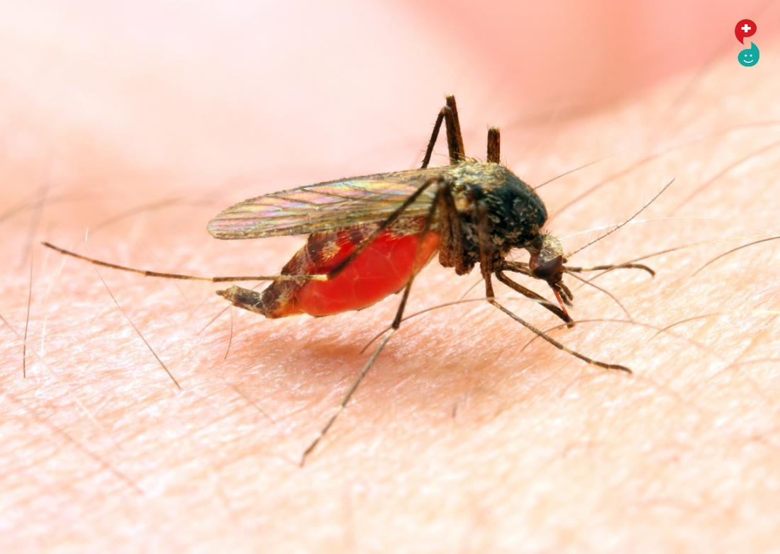 मलेरिया