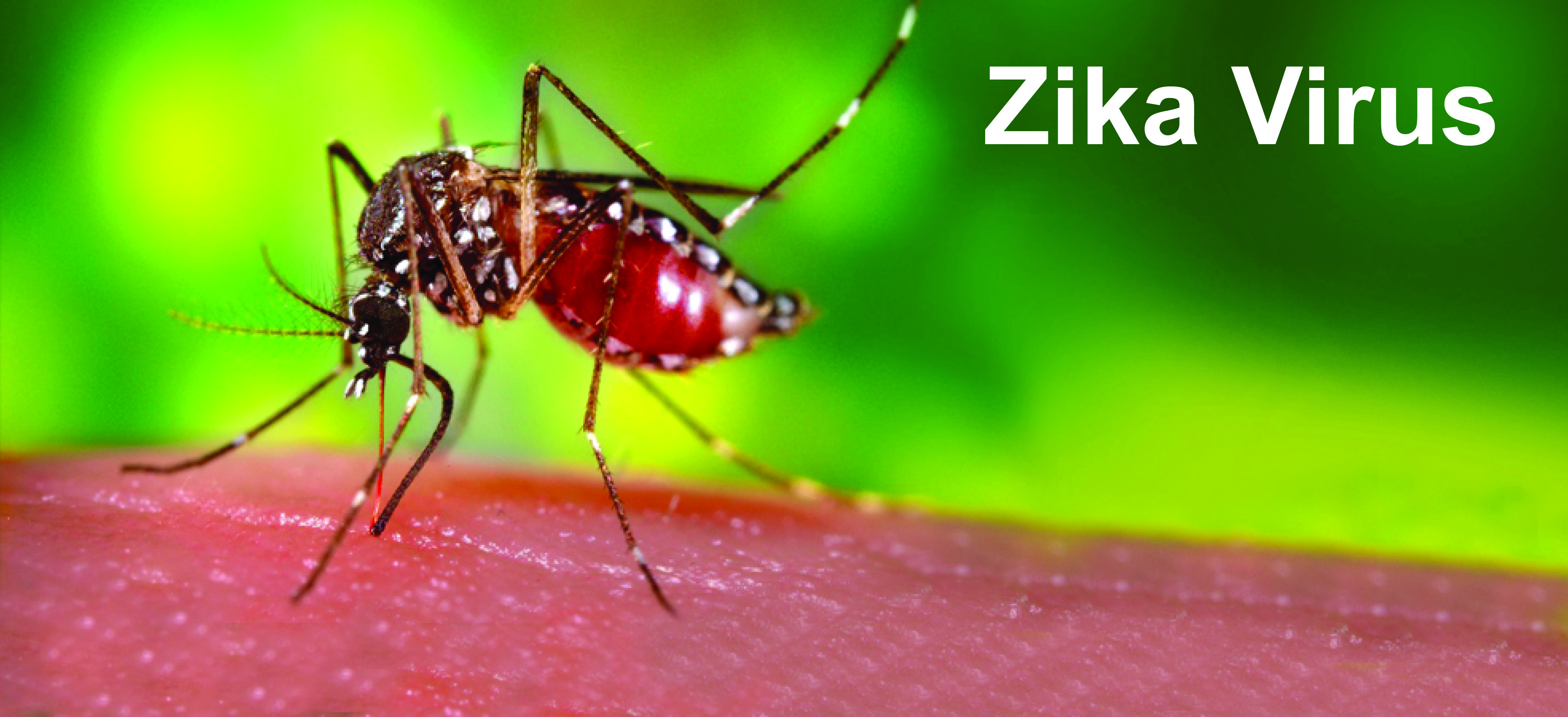 Zika Virus May Lead To a Miscarriage in Pregnant Women