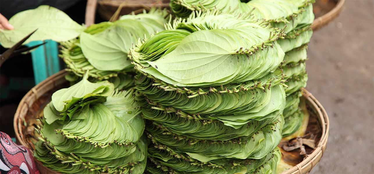 Indigestion Problems? Try Betel Leaf For Digestion, Constipation And Gastric Pain