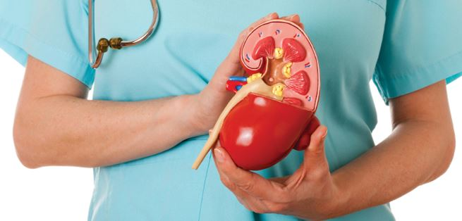Kidney Problems - How Ayurveda Can Help In Its Treatment?