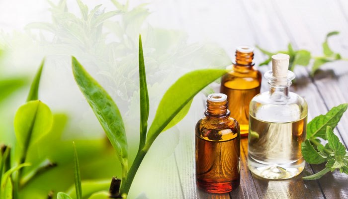Tea Tree Oil - 6 Benefits of It!