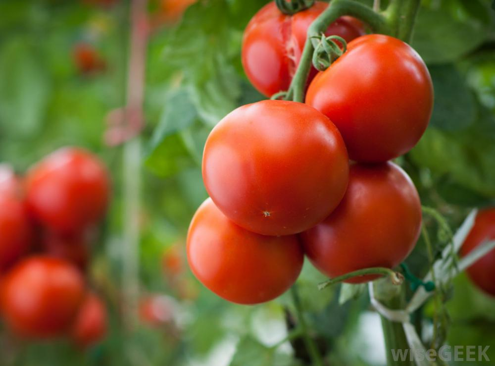 Five Tomato Face Packs That Are Bound To Make Your Skin Soft And Supple!