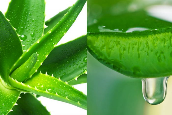 Aloe Vera - 7 Super Amazing Health Benefits!