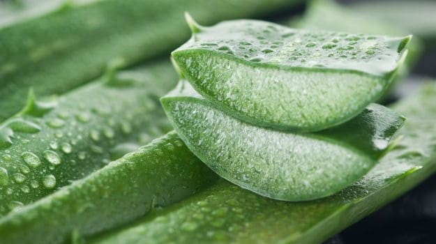 Aloe Vera (Ghritkumari): Benefits And Interesting Ways Of Adding It To Your Diet