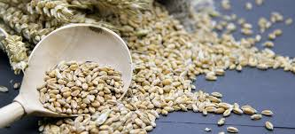 Barley Can Ward Off 'Bad Cholesterol' and Prevent Heart Disease
