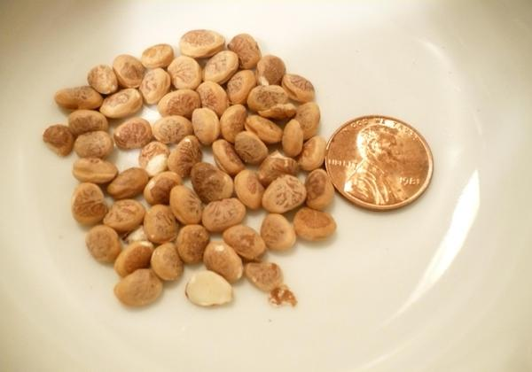 Chironji Health Benefits: 6 Amazing Reasons To Include This Nut In Your Diet!