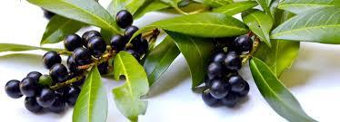Jamuns For Summer: 5 Unbeatable Reasons To Add Black Plums To Your Diet