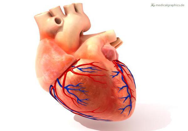 सुक्या मेव्यातील प्रथिने हृदयासाठी उपयुक्त