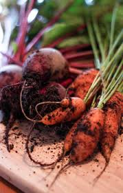 Kale and beetroot are nutritious ingredients for healthy food
