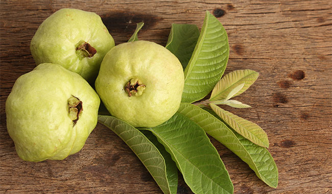 Guavas For Diabetes: 5 Reasons Why You Must Eat More Guavas To Manage Blood Sugar