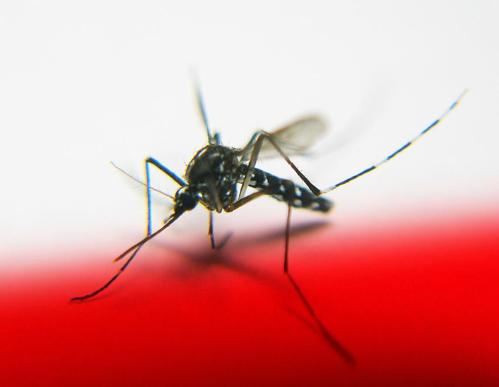 डासांंना दूर ठेवण्यासाठी घरच्या घरी बनवा केमिकल फ्री mosquito-repellent Oil