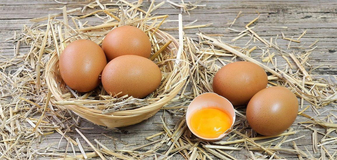 The unseen facets of egg toxicity in India